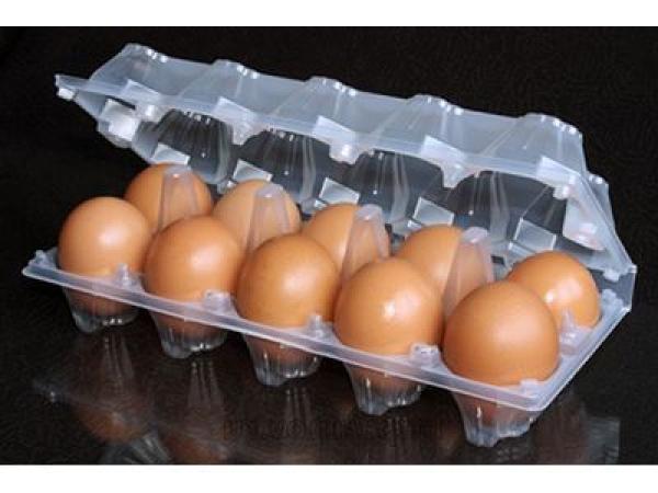 Яйцо куриное столовое СД