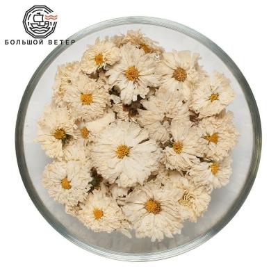 Цветы Хризантемы Китай